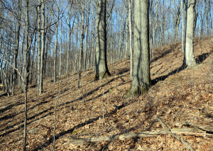 Hill Cumorah. Photo by Kenneth Mays.