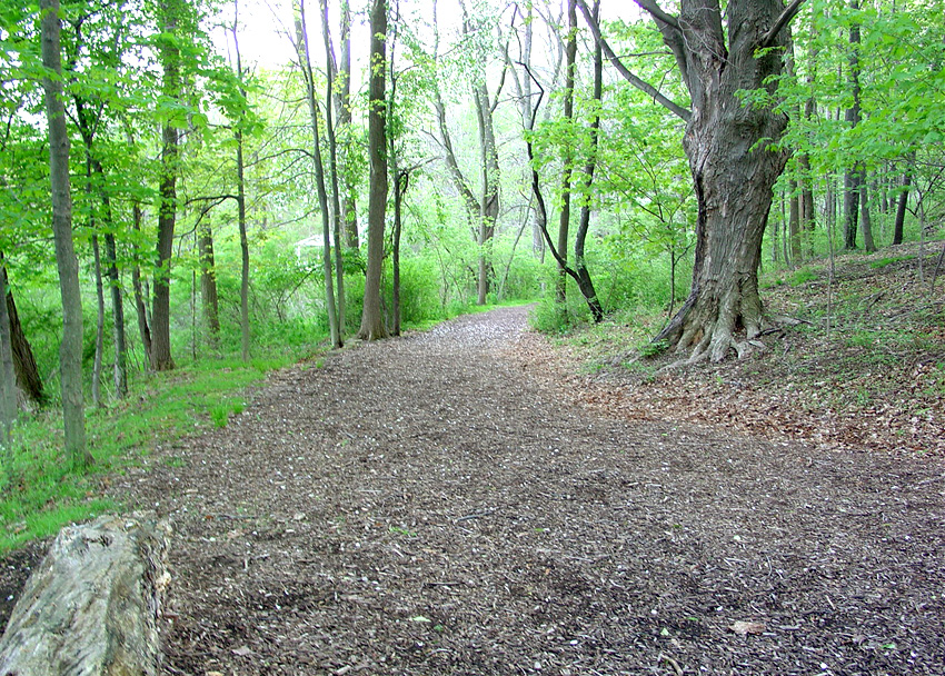Path on what was once the Isaac Morley farm. Photo (2005) by Kenneth Mays.