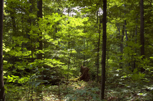 The Sacred Grove. Photo (2009) by Kenneth Mays.