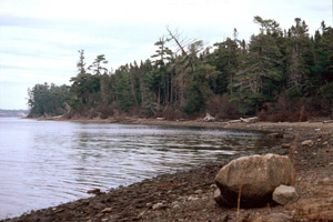 A View of Beaubears Island Photo courtesy of Pierrette Robichaud