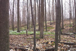 The Sacred Grove in early spring, where young Joseph Smith, Jr. experienced the First Vision Photo courtesy of David C. Wadsworth