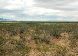 Area of the San Pedro River just north of the U.S. border with Mexico. Photo by Kenneth Mays.