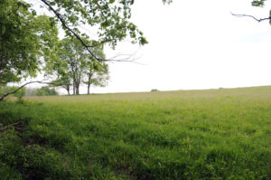 Site of the Michael Arthur farm, Clay County. MO. Photo by Kenneth Mays.